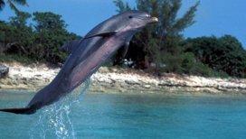 Flipper 2
